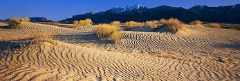 WYOMING. USA. Sand dunes & rabbitbrush below Ferris Mountains. Ferris Dunes. Great Divide Basin. Red Desert.