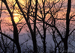 SHENANDOAH NATIONAL PARK, VIRGINIA. USA. Oaks at sunset in early spring. Along Appalachian Trail.