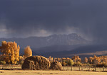 COLORADO. USA. Haystack & cottonwoods in autumn below nimbostratus clouds of approaching storm. Near Kremmling.