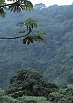 MONTEVERDE, COSTA RICA. Central America. Rain forest on steep slopes. Children's Eternal Rain Forest Preserve.