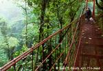 MONTEVERDE PRESERVE, COSTA RICA. Visitors on suspension bridge through forest canopy. Monteverde Cloud Forest.