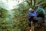 MONTEVERDE PRESERVE, COSTA RICA. Visitors on suspension bridge through forest canopy. Monteverde Cloud Forest.