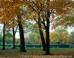 WASHINGTON, D.C. USA. Vietnam Veterans Memorial. Black wall of Vietnam Veterans Memorial below trees in autumn. National Mall.