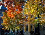 WASHINGTON, D.C. USA. Row houses & trees in autumn. 31st Street & Dumbarton in Georgetown.