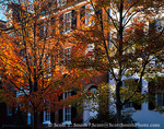 WASHINGTON, D.C. USA. Row houses & trees in autumn. N Street between 31st & 32nd Streeets, Georgetown.