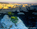 UTAH. USA. Ponderosa pine (Pinus ponderosa) on sandstone above Death Hollow. View into Box-Death Hollow Wilderness from Antone Bench. Dixie National Forest. Grand Staircase-Escalante National Monument in distance.
