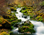 UTAH. USA. Spring-fed creek in autumn. Spring Hollow. Logan Canyon, Bear River Range. Wasatch-Cache National Forest.