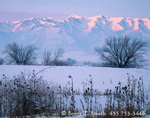 UTAH. USA. Light of winter sunrise on the Wellsville Mountains above willows & teasle. Cache Valley. Great Basin.