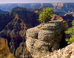 GRAND CANYON NATIONAL PARK, ARIZONA. USA. Pinyon on limestone on rim of Grand Canyon near Point Sublime. North Rim.