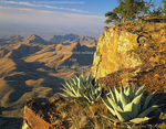 BIG BEND NATIONAL PARK, TEXAS. USA. Agave on the south rim of the Chisos Mountains.