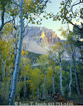 GREAT BASIN NATIONAL PARK, NEVADA. USA.  Jeff Davis Peak & aspen at sunset. Snake Range.
