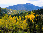MOUNT MORIAH WILDERNESS, NEVADA. USA. View down Hendrys Creek Canyon in autumn. Snake Range. Humboldt National Forest.