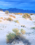 UTAH. USA. Rabbitbrush & sand dunes in Tule Valley. House Range in distance. Proposed Tule Valley BLM Wilderness. Great Basin.