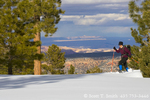 UTAH. USA. Woman snowhoeing past ponderosa pine trees on north slope of Boulder Mountain. Dixie National Forest. Sandstone domes of Capitol Reef National Park & San Rafael Swell in distance.