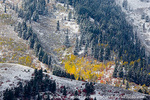 WELLSVILLE MOUNTAINS WILDERNESS, UTAH. USA. Autumn snow on conifers & patch of colorful aspen & maple trees. Wellsville Mountains. Wasatch-Cache National Forest.