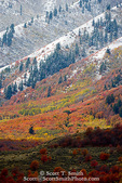 UTAH. USA. Autumn snow on Wellsville Mountains above maple & aspen-covered foothills. Cache Valley.