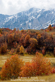 UTAH. USA. Autumn snow on Wellsville Mountains above maple-covered foothills. Cache Valley.
