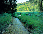 UTAH. USA. Steam Mill Creek flows through meadow below conifers & aspen. Steam Mill Canyon. Bear River Range. Wasatch-Cache National Forest.