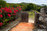 """MARTINIQUE. French Antilles. West Indies. Flowering bougainvillea & ruins at site of Chateau Dubuc on the Caravelle Peninsula. The """"Dubuc Castle"""" was first noted on maps of Martinique in 1773. Ostensibly a site of sugar production, the real business at the chateau was the smuggling and transport of slaves."""