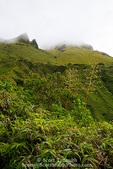 MARTINIQUE. French Antilles. West Indies. Tropical vegetation below cloud-shrouded sumitt of Mt. Pelée.