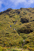 MARTINIQUE. French Antilles. West Indies. Hikers on steep trail just below summit of Mt. Pelée.