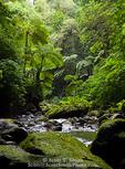 MARTINIQUE. French Antilles. West Indies. Gorge of the Falaise River (Gorges de la Falaise).