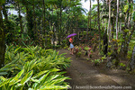 MARTINIQUE. French Antilles. West Indies. Visitor at Jardin de Balata (Balata Garden). Begun in 1982 on land owned by his grandmother, Balata Garden was created by Jean-Philippe Thoze & features over 3000 tropical species from around the world. The Garden opened to the public in 1986.