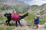 BRIDGER WILDERNESS, WYOMING. USA. Woman with pack llama at Bald Mountain Pass. Wind River Range. Bridger-Teton National Forest. Along Continental Divide National Scenic Trail (locally called Fremont Trail).