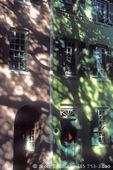 CHARLESTON, SOUTH CAROLINA. USA. Trees cast shadows on buildings along Elliot Street.