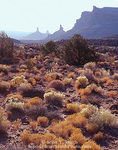 UTAH. USA. Desert vegetation in Valley of the Gods in autumn. Battleship Rock, Franklin Butte, Rooster Butte, & Sitting Hen Butte in distance. Colorado Plateau.