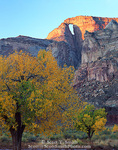 UTAH. USA. First light of sunrise on Hondoo Arch (The Hondoo) above cottonwood trees in autumn. Flood plain in canyon of Muddy Creek. San Rafael Swell. BLM public land.