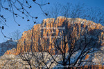UTAH. USA. View of the Watchman in Zion National Park through pecan trees in Springdale.