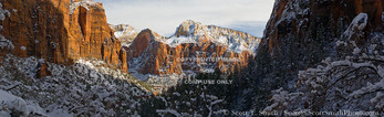 ZION NATIONAL PARK, UTAH. USA. Deep snow on cliffs & trees. View of Zion Canyon from Emerald Pools trail. Red Arch Mountain & Deertrap Mountain in distance.