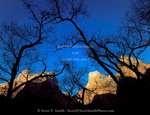 ZION NATIONAL PARK, UTAH. USA. Light of winter sunrise on Court of the Patriarchs above bare branches of cottonwood trees. Zion Canyon.
