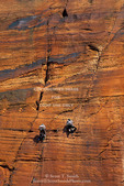ZION NATIONAL PARK, UTAH. USA. Climbers on sandstone cliffs above Temple of Sinawava.