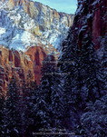 ZION NATIONAL PARK, UTAH. USA. Snow on cliffs & conifers. Zion Canyon.