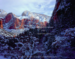 ZION NATIONAL PARK, UTAH. USA. Deep snow on oak brush, conifers, & cliffs. Zion Canyon.