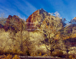 ZION NATIONAL PARK, UTAH. USA. Cottonwood trees in winter below Meridian Tower in Towers of the Virgin. Virgin River flood plain. Zion Canyon.