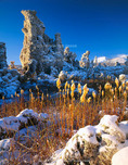 MONO BASIN NATIONAL FOREST RESERVE, CALIFORNIA. USA. Fresh snow on tufa formations & rushes along shore of Mono Lake. Mono Basin. Inyo National Forest.