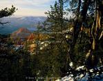 CEDAR BREAKS NATIONAL MONUMENT, UTAH. USA. Bristlecone pines (Pinus aristata) above Cedar Breaks at sunset in winter.