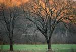 BUFFALO NATIONAL RIVER, ARKANSAS. USA. Trees at sunrise in early spring along Buffalo River. Boxley Valley.