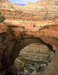 Capitol Reef National Park, Utah. USA. USA. Hiker on Cassidy Arch.
