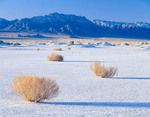 Nevada. USA. Isolated bushes on playa. Railroad Valley. Grant Range in distance. Great Basin.