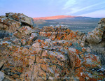 Wyoming. USA. Lichen-covered rock at sunrise. Great Divide Basin. Bull Springs Rim in distance. Red Desert.
