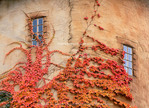 Utah. USA. Detail of round tower & Virginia creeper. La Caille at Quail Run in autumn. Restaurant & estate at the mouth of Little Cottonwood Canyon. Salt Lake Valley. Wasatch Front.