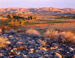 Nevada. USA. Desert vegetation & stones above wetlands, pastures, & palm groves at sunrise. View of LDS Ranch at head of Muddy River. Arrow Canyon Range in distance. Moapa Valley. Mojave Desert.