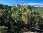Utah. USA. Pinyon/juniper forest (Juniperus osteosperma) & (Pinus monphylla) below Steamboat Mountain. Indian Peak Range. Great Basin. Proposed Steamboat Mountain BLM Wilderness.