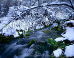 Utah. USA. Spring-fed stream in winter. Spring Hollow, Logan Canyon. Bear River Range. Uinta-Wasatch-Cache National Forest.