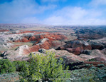 Petrified Forest National Park, Arizona. USA. Juniper & eroded landscape of Painted Desert below clearing fog.