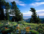 Utah. USA. Paintbrush & conifers on crest of Bear River Range. Cache Valley in distance. Uinta-Wasatch-Cache National Forest.